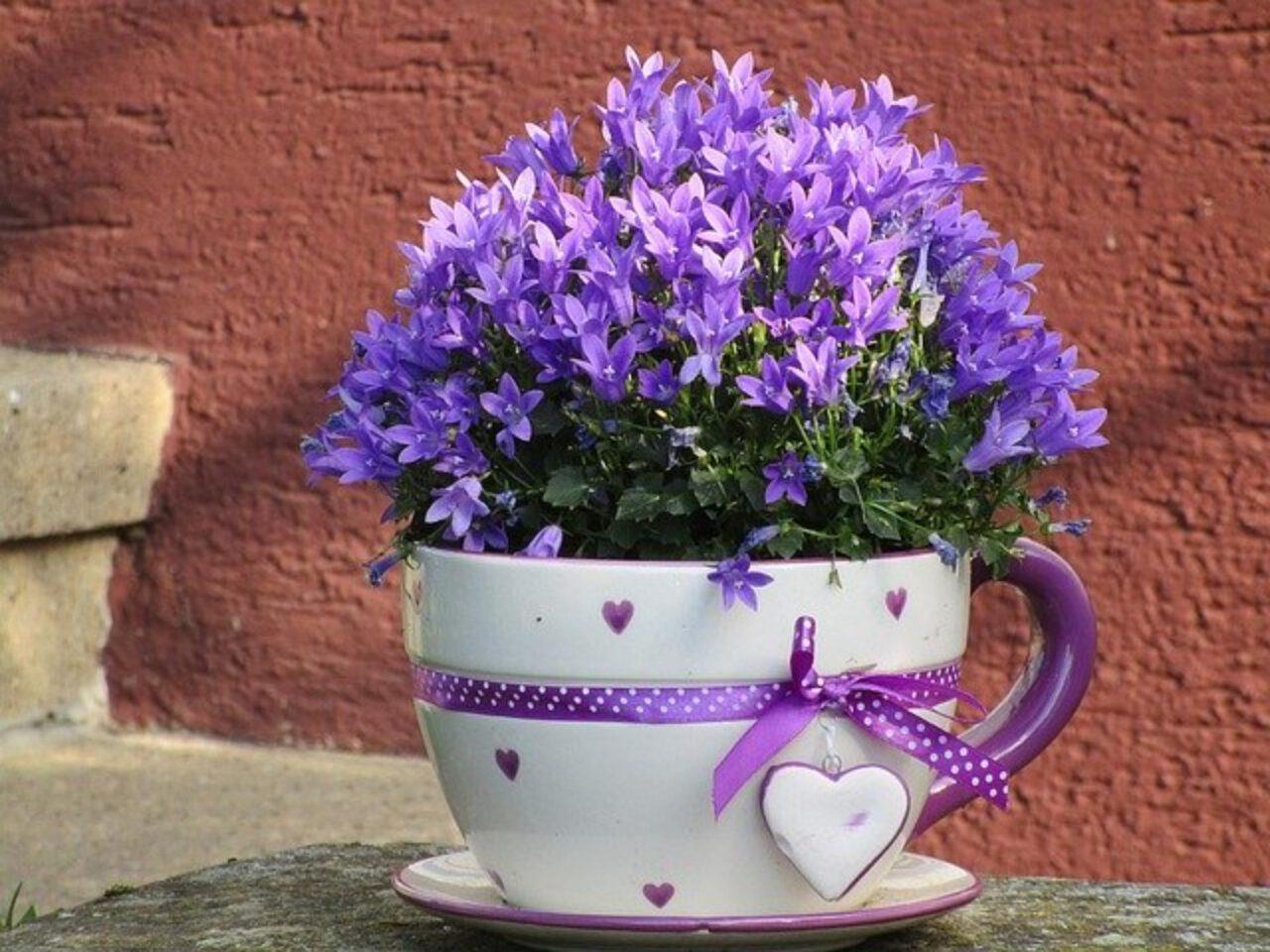 Kwiaty nie tylko w doniczce…